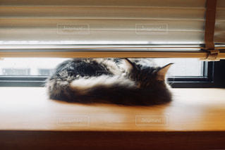 寝てる猫の写真・画像素材[1290536]
