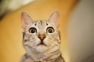 こっちを見てる猫の写真・画像素材[1290537]