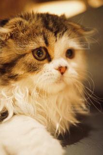 猫の視線の写真・画像素材[1290538]