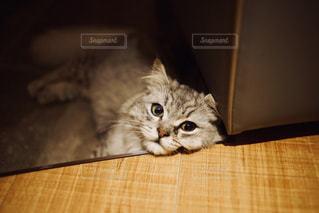 とろけそうな猫の写真・画像素材[1290540]