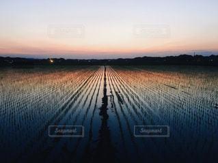 夕方の田園の写真・画像素材[1292543]