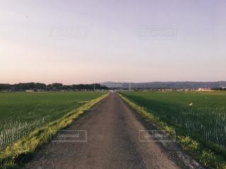 夏の田んぼ道の写真・画像素材[1292555]