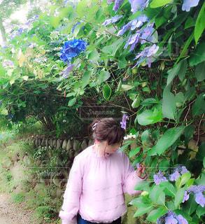 森林,屋外,あじさい,散歩,山,樹木,紫陽花,人物,人,梅雨,女の人,リフレッシュ