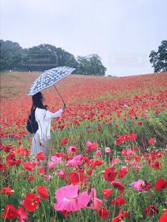 happy rainy dayの写真・画像素材[2181168]