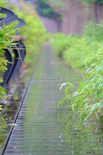 雨,屋外,緑,樹木,梅雨,草木,ローアングル