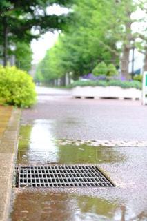 雨,屋外,梅雨,排水口,排水,ローアングル,排水マス