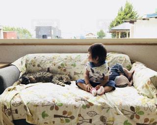 猫,お部屋,室内,赤ちゃん,のんびり