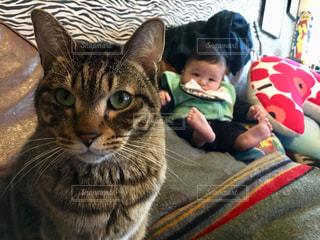 猫の隣に座っている赤ん坊の写真・画像素材[1213703]
