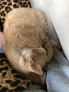 猫,お部屋,かわいい,部屋,室内,家,寝る,リラックス,癒し,のんびり,寝てる,眠い,まったり,お家,寝,アニマル,ゆったり,リラクゼーション