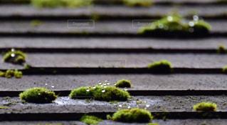 雨,傘,屋外,森,緑,水,水滴,山,コケ,苔,水玉,丸,雫,あめ,つゆ