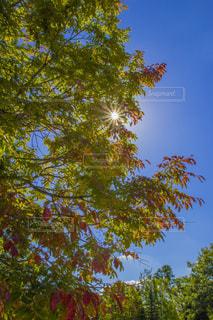 風景,空,秋,紅葉,太陽,秋空