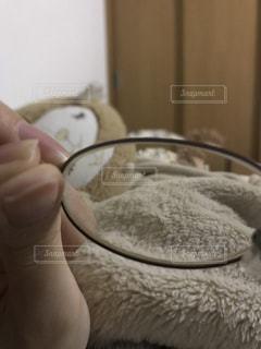 足,室内,羊,手,眼鏡,毛布,爪,部屋でのんびり