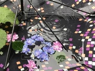 雨,傘,ピンク,あじさい,青,紫陽花,梅雨,つゆ,アジサイ,カサ