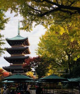 秋の上野公園の写真・画像素材[1603807]