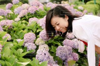 雨,紫陽花,梅雨,つゆ,6月,ツユ