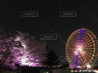 夜桜と観覧車の写真・画像素材[1218624]