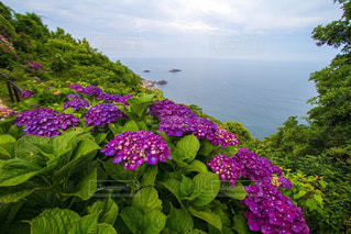 海,景色,紫陽花,雨上がり