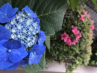 近くの花のアップの写真・画像素材[1222850]
