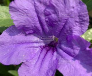 近くに紫の花のアップの写真・画像素材[1369573]