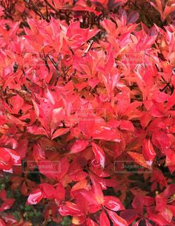 近くの植物にピンクの花のアップの写真・画像素材[1605136]