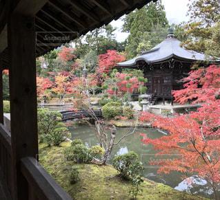 清涼寺の紅葉の御庭の写真・画像素材[1613547]