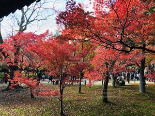 公園の大きな木の写真・画像素材[1619216]