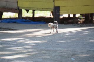 仔犬の写真・画像素材[1218187]