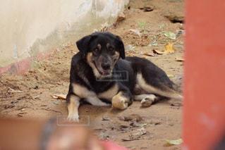 野良犬の写真・画像素材[1218189]