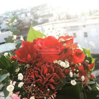 花の写真・画像素材[2020581]