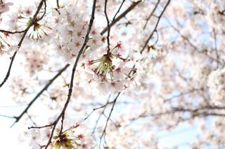 花の写真・画像素材[2056659]