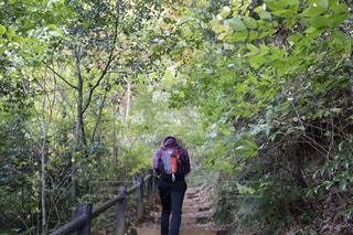 自然,木,緑,後ろ姿,山,人物,背中,人,高尾山,山登り