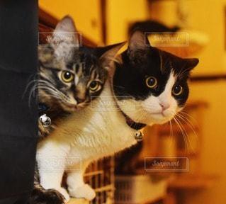猫の写真・画像素材[44411]