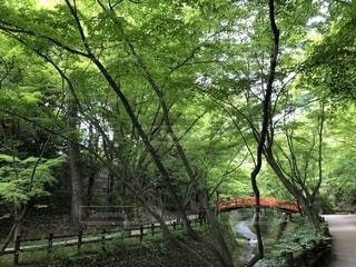 小川,新緑,梅雨