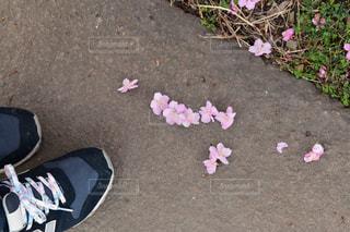 桜,靴,足元,花見,お花見,桜の時期