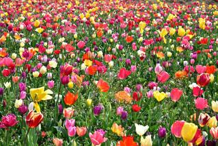 花の写真・画像素材[2036106]