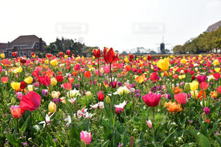花の写真・画像素材[2036112]