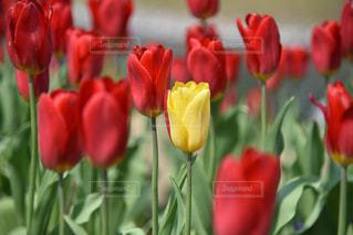 花の写真・画像素材[2036197]