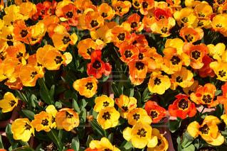 花の写真・画像素材[2036205]