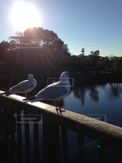 水の体の横にドックに鳥立っています。の写真・画像素材[1234154]