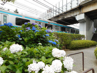 花,新鮮,アジサイ,青い電車と青いアジサイ,線路脇のアジサイ,梅雨のアジサイ,陸橋とアジサイ
