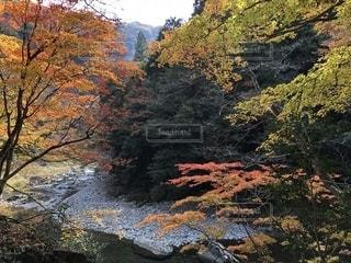 自然,紅葉,樹木,渓谷,三段峡
