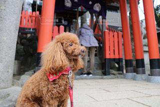 建物の前に座っている犬の写真・画像素材[1222509]