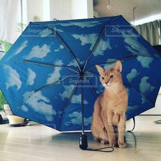 スカイアンブレラで梅雨を凌ぐの写真・画像素材[1224485]