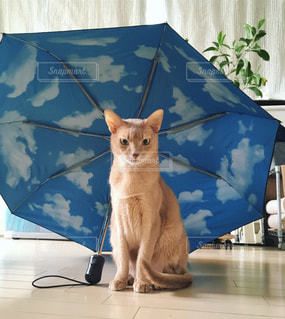 傘があったら入る猫の写真・画像素材[2206414]