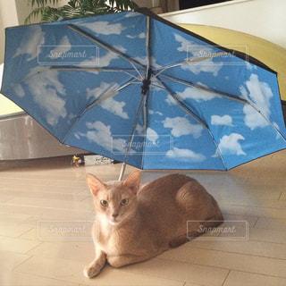 お気に入りの傘の写真・画像素材[2206444]
