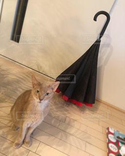 逆さ傘と猫の写真・画像素材[2207286]