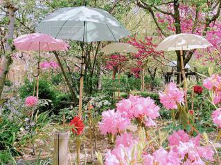 花,傘,梅雨