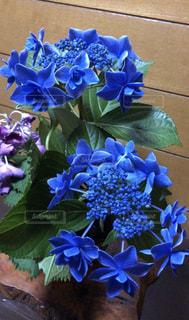 花,青,紫,紫陽花,梅雨,6月,外は雨,お家の中