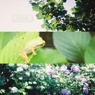 greenの写真・画像素材[1229768]