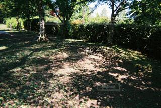 木漏れ日の写真・画像素材[1233520]